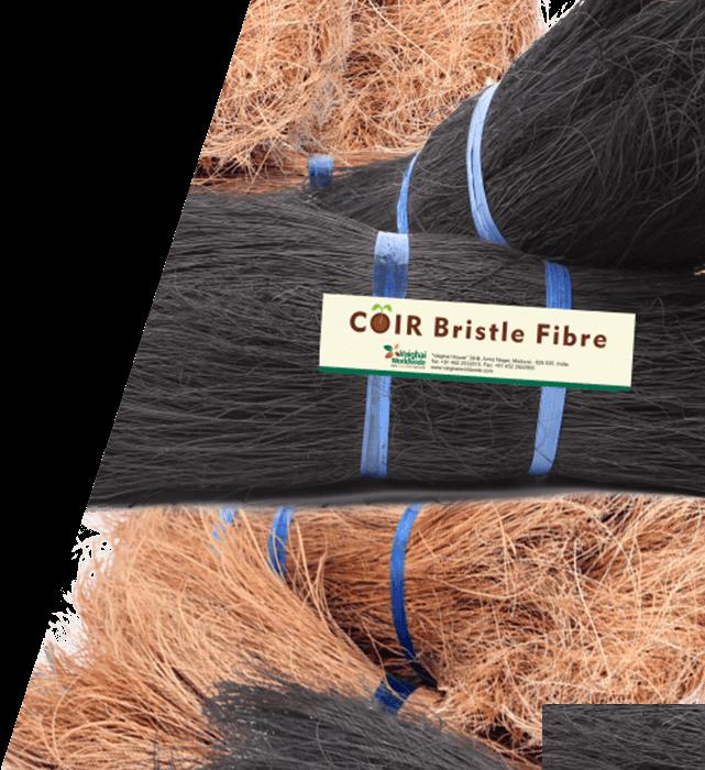 Coir Bristle Fibre