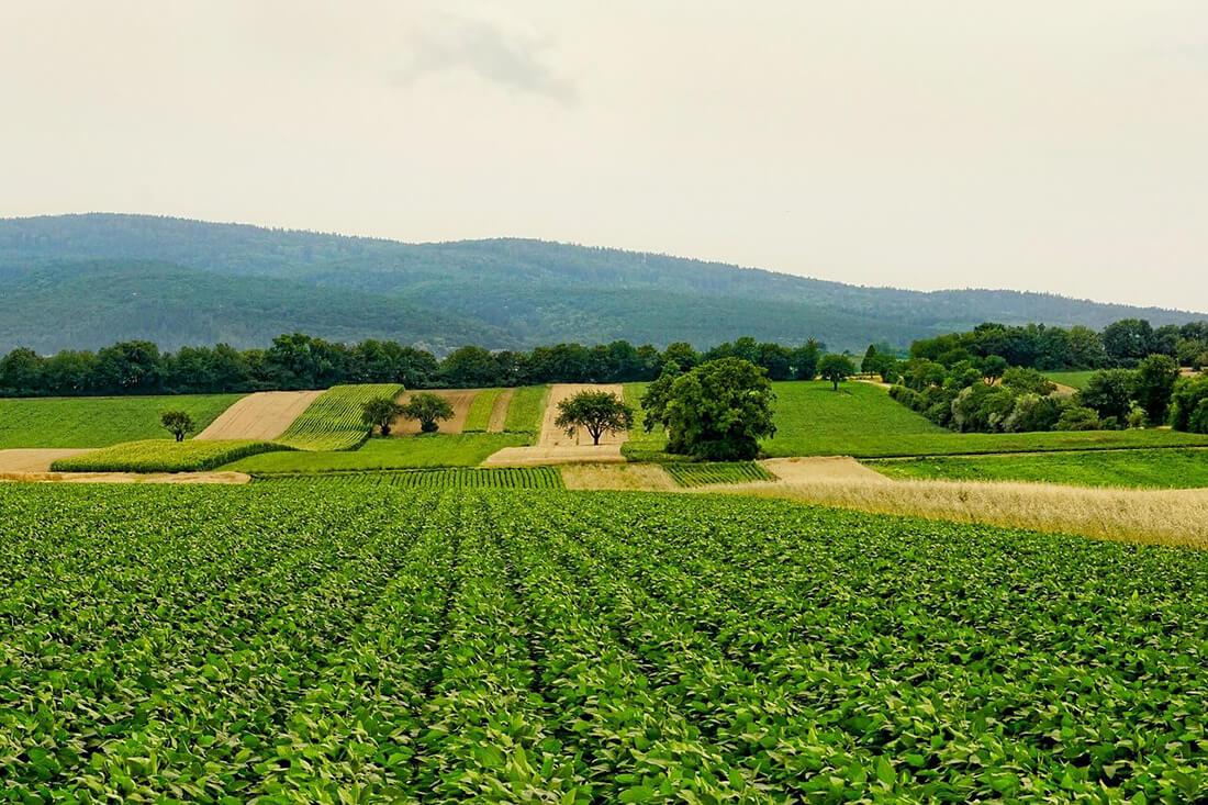El sector agroalimentario andaluz marca récord de exportaciones al mercado británico