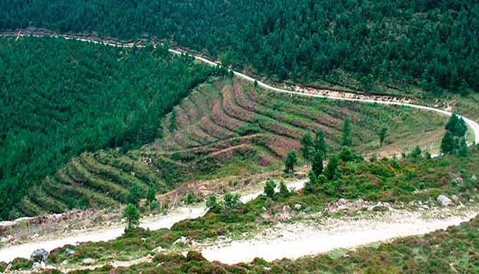 Ordenación de montes Certificación forestal y cadena de custodia Cubicación y tasación de montes Repoblaciones, tratamie