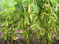 mr bean soya industry Sau khi due diligence thành công, soya garden không chỉ được shark thủy rót vốn lên đến 20 tỷ đồng mà còn nhận được lời mời hợp tác từ mr bean, trở thành đối tác chiến lược số 1 tại thị trường việt nam.