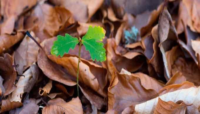 · Aplicación productos fitosanitarios · Lucha biológica contra plagas · Tratamientos especiales