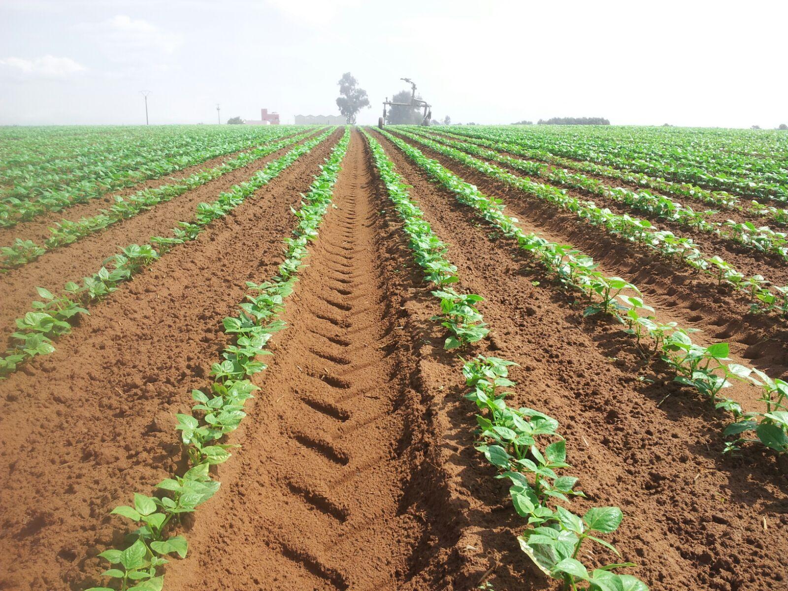 irrigation bessente 225 lotiss mabrouka l. Black Bedroom Furniture Sets. Home Design Ideas