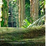 Traitement du bois La production de fibres Les fibres naturelles jouent un rôle important dans l'environnement industrie