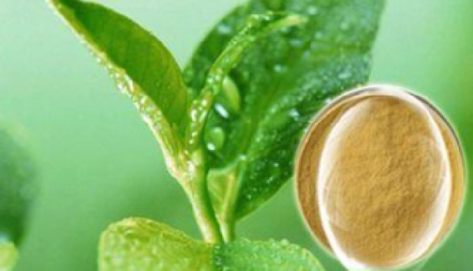 L-theanine, chemical name N-ethyl-glutamine, naturally exists in tea plants, accounts for 1%~2% of dry leaves. And it