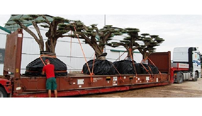 Transporte de árboles, arbustos y otras plantas vivas https://www.ibertransit.com/especialidades/arboles-plantas-arbusto