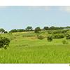 L'économie du Tadla-Azilal se base sur une filière agricole de renom, forte d'une production végétale et animale diversi