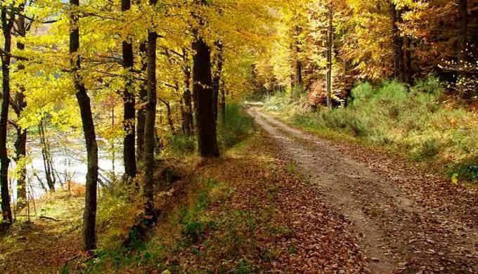 · Construcción de caminos y pistas forestales · Cierres ganaderos y pasos canadienses · Depósito