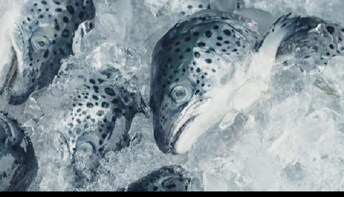 KM Fish Machinery - Fish Processing Equipment