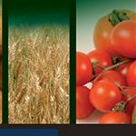SARAPROC MAROC est depuis 2012 importateur et distributeur exclusif pour le Maroc des fertilisants italiens PUCCIONI.