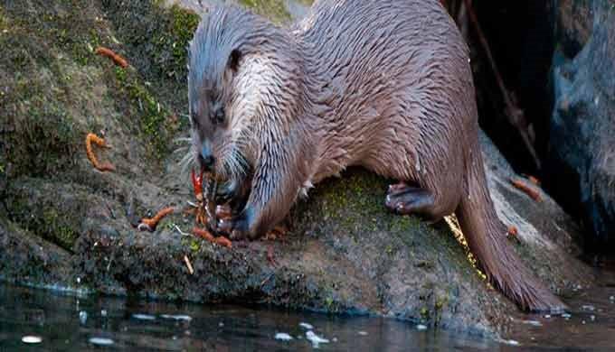 · Flora y fauna · Planificación y gestión de espacios naturales protegidos · Red Natura 2000 ·